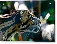 Big Cat Acrylic Print by Gene Sizemore