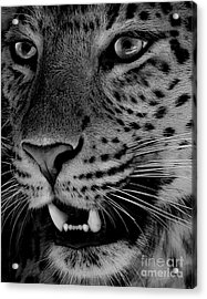 Acrylic Print featuring the painting Big Cat II by Louise Fahy