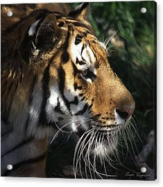 Big Cat No 60 Acrylic Print by Ernie Ferguson