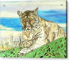 Big Cat Watching Out For Prey Acrylic Print by Connie Valasco