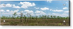 Acrylic Print featuring the photograph Big Cypress Marshes by Jon Glaser