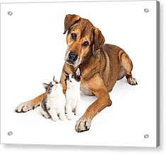 Big Dog Looking Down At Kittens Acrylic Print