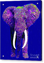 Big Elephant 20130201m118 Acrylic Print by Wingsdomain Art and Photography