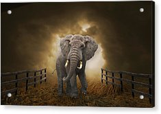 Acrylic Print featuring the mixed media Big Entrance Elephant Art by Marvin Blaine
