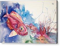 Big Eye Squirrelfish Acrylic Print by Tanya L Haynes - Printscapes
