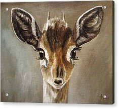 Big Eyes Dik-dik Acrylic Print
