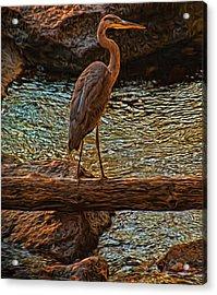 Big Falls Blue Heron Acrylic Print by Trey Foerster