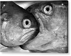 Big Fish Eat Small Fish Acrylic Print