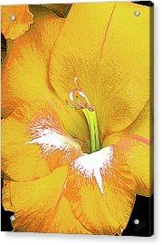 Big Glad In Yellow Acrylic Print