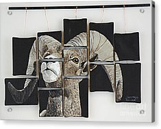 Big Horn Fragments Acrylic Print by Taunya Bruns