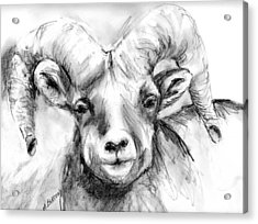 Acrylic Print featuring the drawing Big Horn Sheep by Marilyn Barton