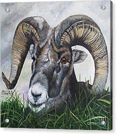 Big Horned Sheep Acrylic Print