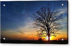 Big Oak Splendor Acrylic Print