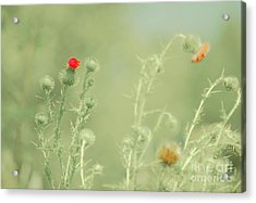 Big Red, Little Red Acrylic Print