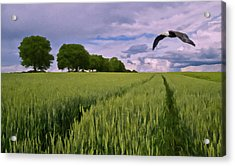 Acrylic Print featuring the photograph Big Sky by David Dehner