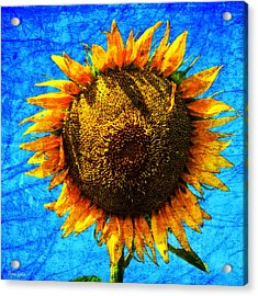 Big Sunflower Acrylic Print