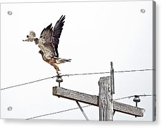 Big Surprise In A Little Package Acrylic Print by James Steele