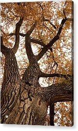 Big Tree Acrylic Print by James BO  Insogna