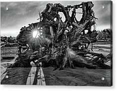 Big Tree On The Beach At Sunrise In Monochrome Acrylic Print