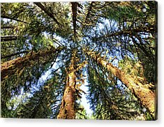 Big Trees In Olympic National Park Acrylic Print