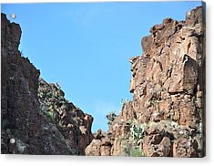 Bigbend Bighorn Acrylic Print by Thor Sigstedt