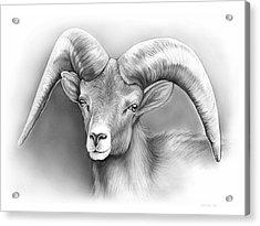 Bighorn Ram Acrylic Print