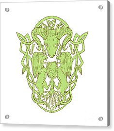 Bighorn Sheep Lion Tree Coat Of Arms Celtic Knot Acrylic Print