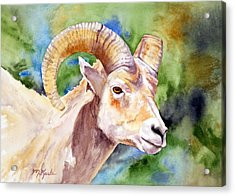 Bighorn Sheep Portrait Acrylic Print