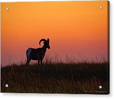 Bighorn Sunset Acrylic Print