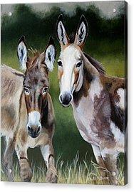 Bill's Donkeys Acrylic Print