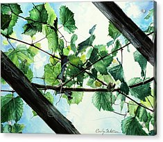 Biltmore Grapevines Overhead Acrylic Print