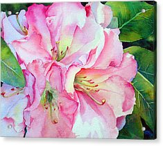 Biltmore Rhodies Acrylic Print by Judy Mercer