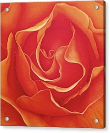 Biltmore Rose Acrylic Print by Dee Dee  Whittle