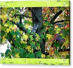 Bingo In Tree Acrylic Print