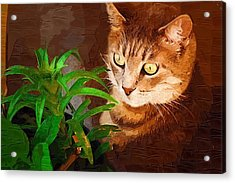 Acrylic Print featuring the photograph Bink by Donna Bentley