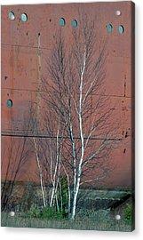 Birch And Ship Acrylic Print
