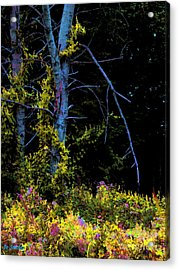 Birch And Vines Acrylic Print