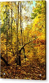 Birch Autumn Acrylic Print by Henryk Gorecki