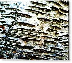 Birch Bark Acrylic Print