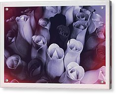 Birch Bark Roses 2 Acrylic Print by Cindy Nunn