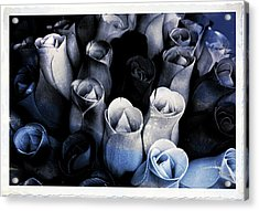 Birch Bark Roses 3 Acrylic Print by Cindy Nunn