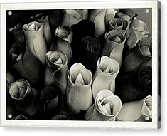 Birch Bark Roses 4 Acrylic Print by Cindy Nunn