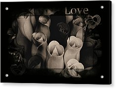 Birch Bark Roses 6 Acrylic Print by Cindy Nunn