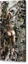 Birch Beauty Acrylic Print by Tlynn Brentnall