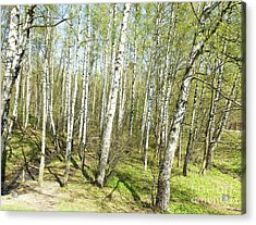 Birch Forest In Spring Acrylic Print by Irina Afonskaya