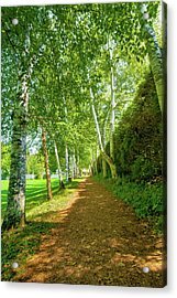 Birch Gauntlet Acrylic Print by Greg Fortier