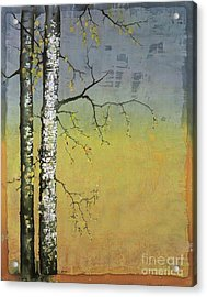 Birch In A Golden Field Acrylic Print