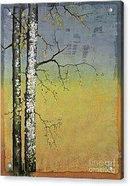 Birch In A Golden Field Acrylic Print by Carolyn Doe