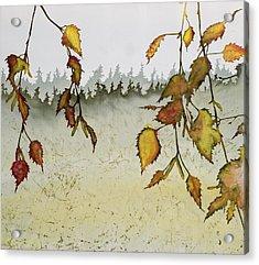 Birch In Autumn Acrylic Print by Carolyn Doe