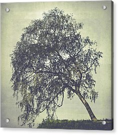 Acrylic Print featuring the photograph Birch In The Mist by Ari Salmela
